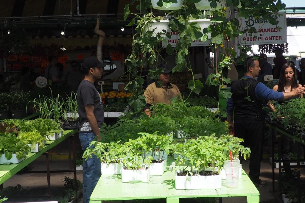 Les stands de plantes du marché Jean Talon